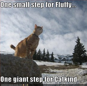 One small step for Fluffy...  One giant step for Catkind