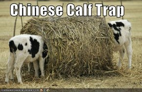 Chinese Calf Trap