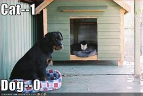 Cat--1  Dog--0