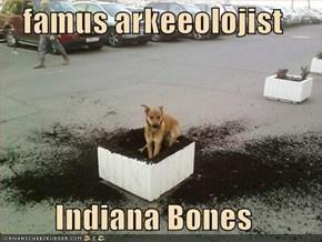 famus arkeeolojist  Indiana Bones