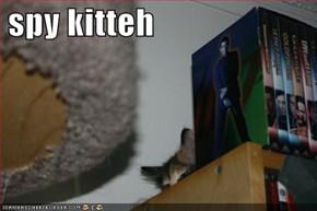 spy kitteh