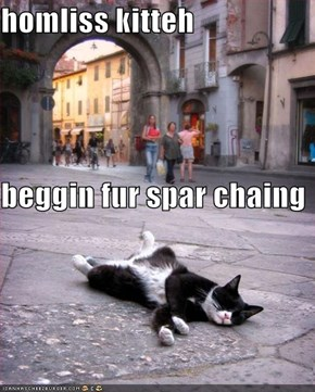 homliss kitteh beggin fur spar chaing