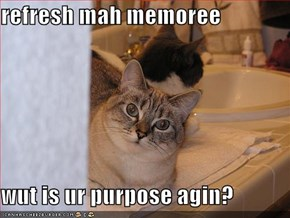 refresh mah memoree  wut is ur purpose agin?