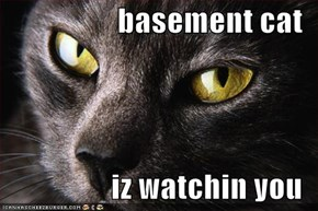 basement cat   iz watchin you