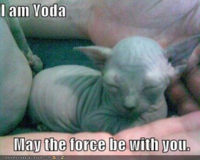 I am Yoda  May the force be with you.