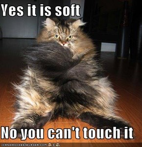 Yes it is soft   No you can't touch it