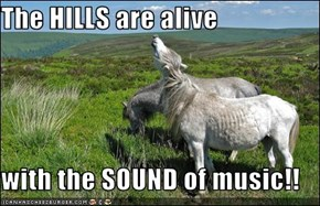 The HILLS are alive  with the SOUND of music!!