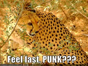 Feel fast, PUNK???