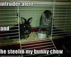 intruder alert  and he steelin my bunny chow