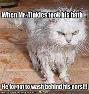When Mr. Tinkles took his bath...