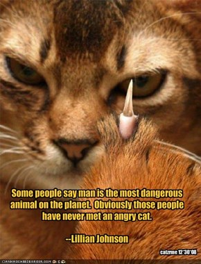 Some people say man is the most dangerous animal on the planet.  Obviously those people have never met an angry cat.--Lillian Johnson