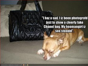 """I haz a sad. I iz been photografd just to show a cleerly fake Chanel bag. My hoomangirl iz soo stoopid""."