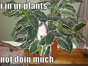 i in ur plants  not doin much