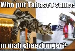 Who put Tabasco sauce  in mah cheezburger?
