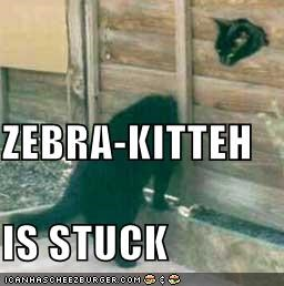 ZEBRA-KITTEH IS STUCK