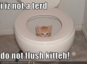 i iz not a terd   do not flush kitteh!