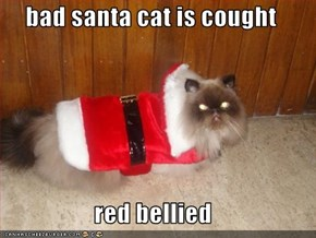 bad santa cat is cought  red bellied