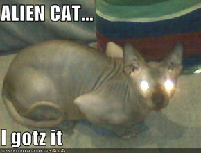 ALIEN CAT...  I gotz it