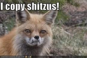 I copy shitzus!