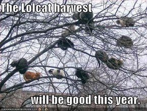 The Lolcat harvest  will be good this year.