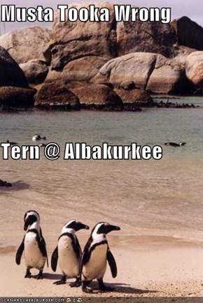 Musta Tooka Wrong Tern @ Albakurkee