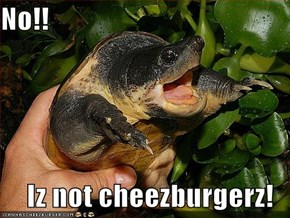 No!!  Iz not cheezburgerz!