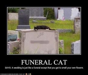 FUNERAL CAT