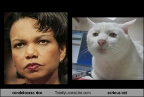 condoleezza rice Totally Looks Like serious cat