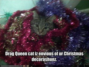 Drag Queen cat iz envious of ur Christmas decorashunz.