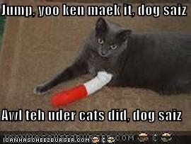 Jump, yoo ken maek it, dog saiz  Awl teh uder cats did, dog saiz