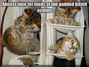 Almost time for meds at the padded kitteh asylum