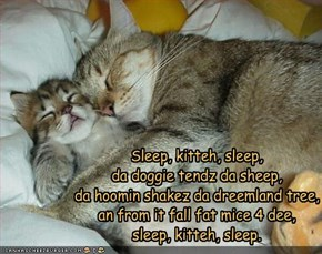 Sleep, kitteh, sleep,