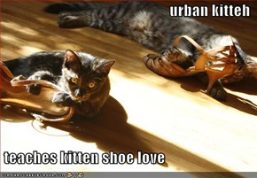 urban kitteh   teaches kitten shoe love