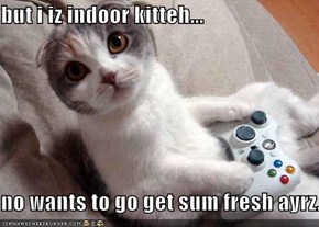 but i iz indoor kitteh...  no wants to go get sum fresh ayrz.