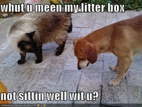 whut u meen my litter box  not sittin well wit u?
