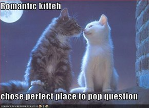 Romantic kitteh  chose perfect place to pop question