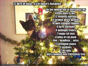 On the twelfth day of Christmas my kitten gave to me... 