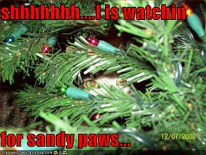 shhhhhhh....I is watchin  for sandy paws...