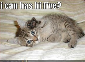 i can has hi five?