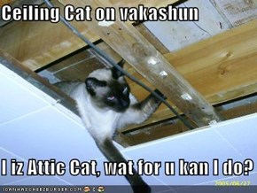 Ceiling Cat on vakashun  I iz Attic Cat, wat for u kan I do?