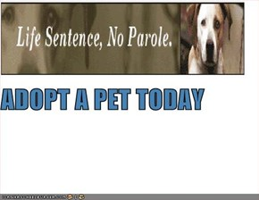 ADOPT A PET TODAY