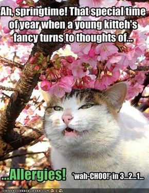 Ah, springtime! That special time of year when a young kitteh's fancy turns to thoughts of...