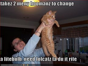 takez 2 meny hoomanz to change  a litebulb, need lolcatz ta du it rite