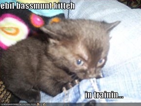 ebil bassmunt kitteh                                                     in trainin...