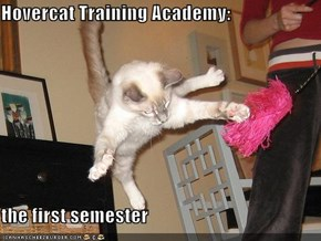 Hovercat Training Academy:  the first semester