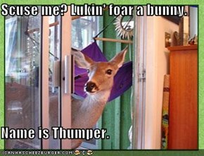Scuse me? Lukin' foar a bunny.  Name is Thumper.