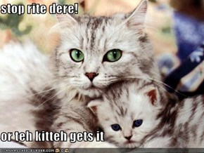 stop rite dere!  or teh kitteh gets it