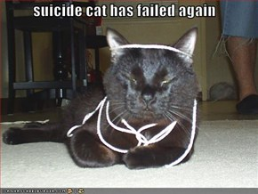 suicide cat has failed again