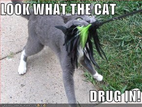 LOOK WHAT THE CAT                                  DRUG IN!