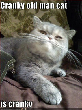 Cranky old man cat  is cranky